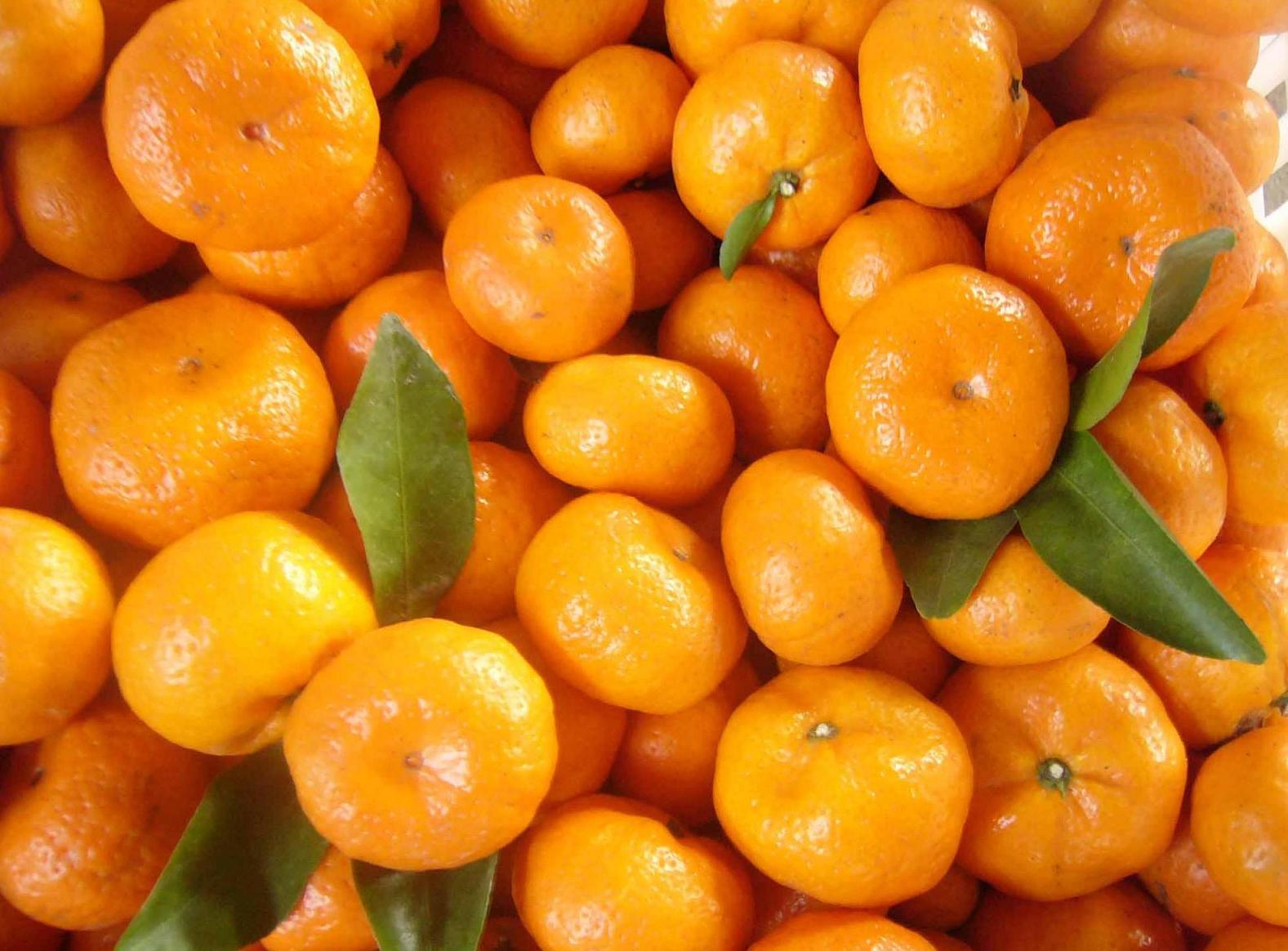 超迷你珍珠砂糖橘,好吃不得了!